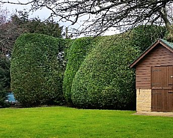 Hedge care by Park View Turf and Garden Services