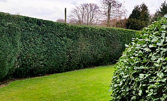 Hedge trimming by Park View Turf and Garden Services