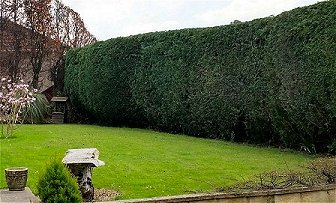 Evergreen hedging shaped and trimmed in Oldland Common